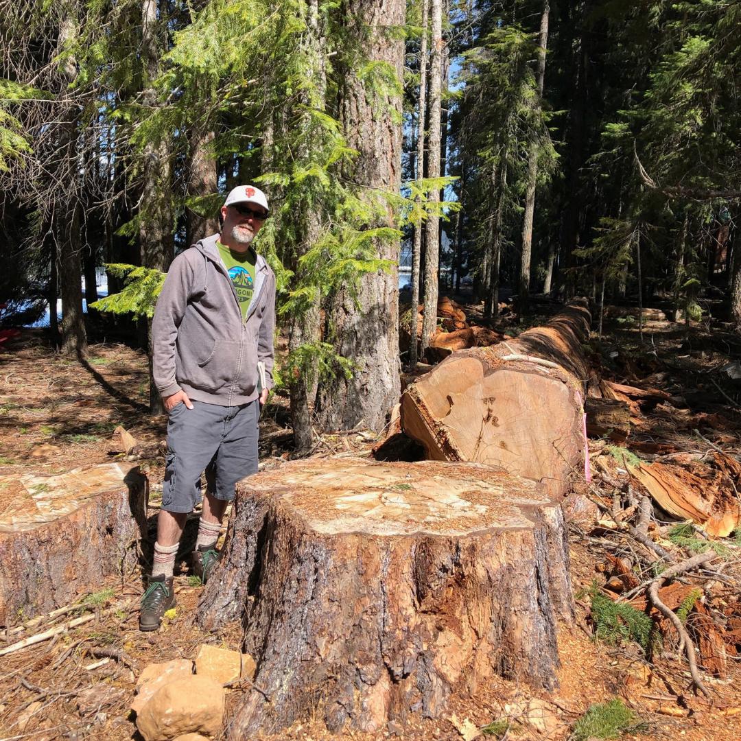 OG Pine Tree - LOW.png