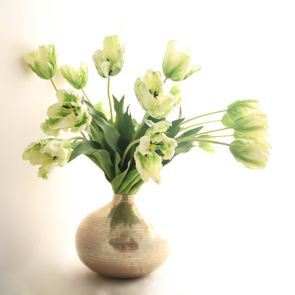 Green tulip 1.jpg