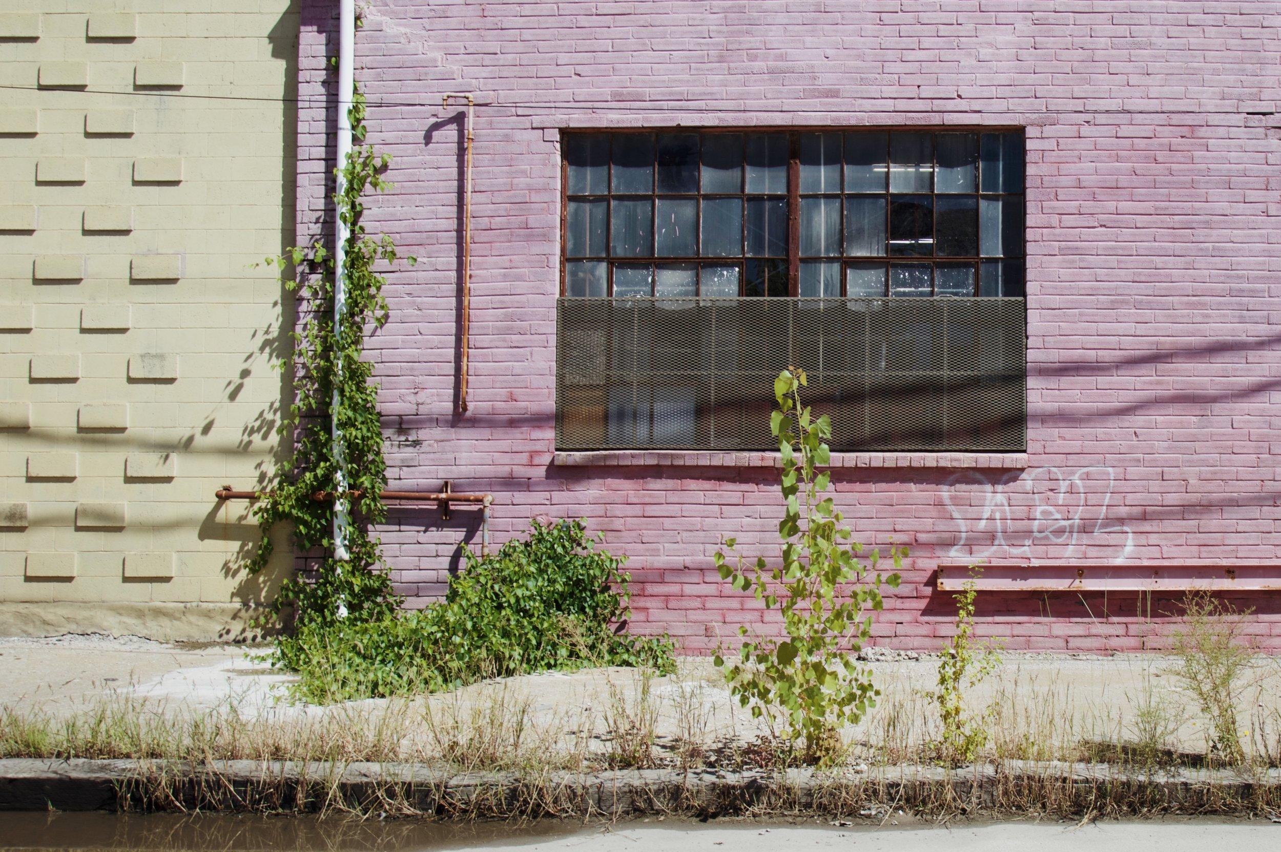 Pink_WestBottoms.JPG