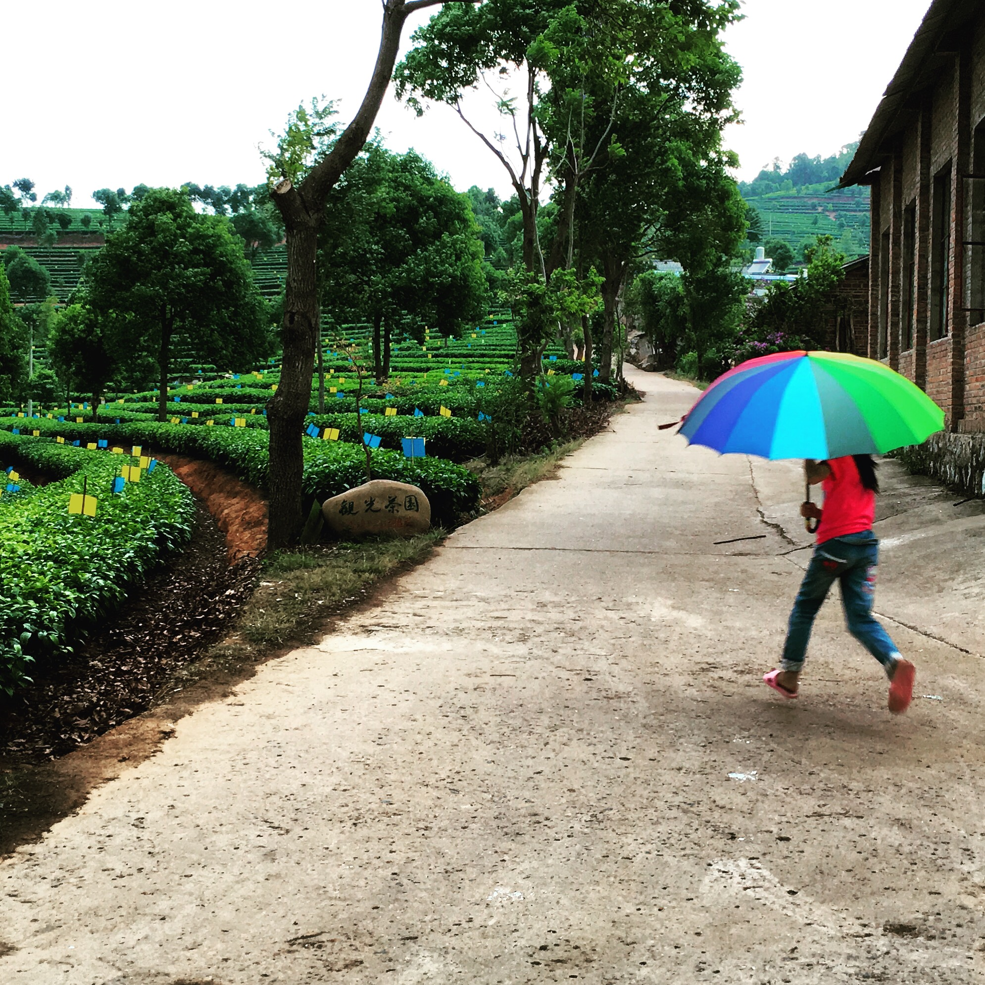 Running in the Rain, Puer City.JPG