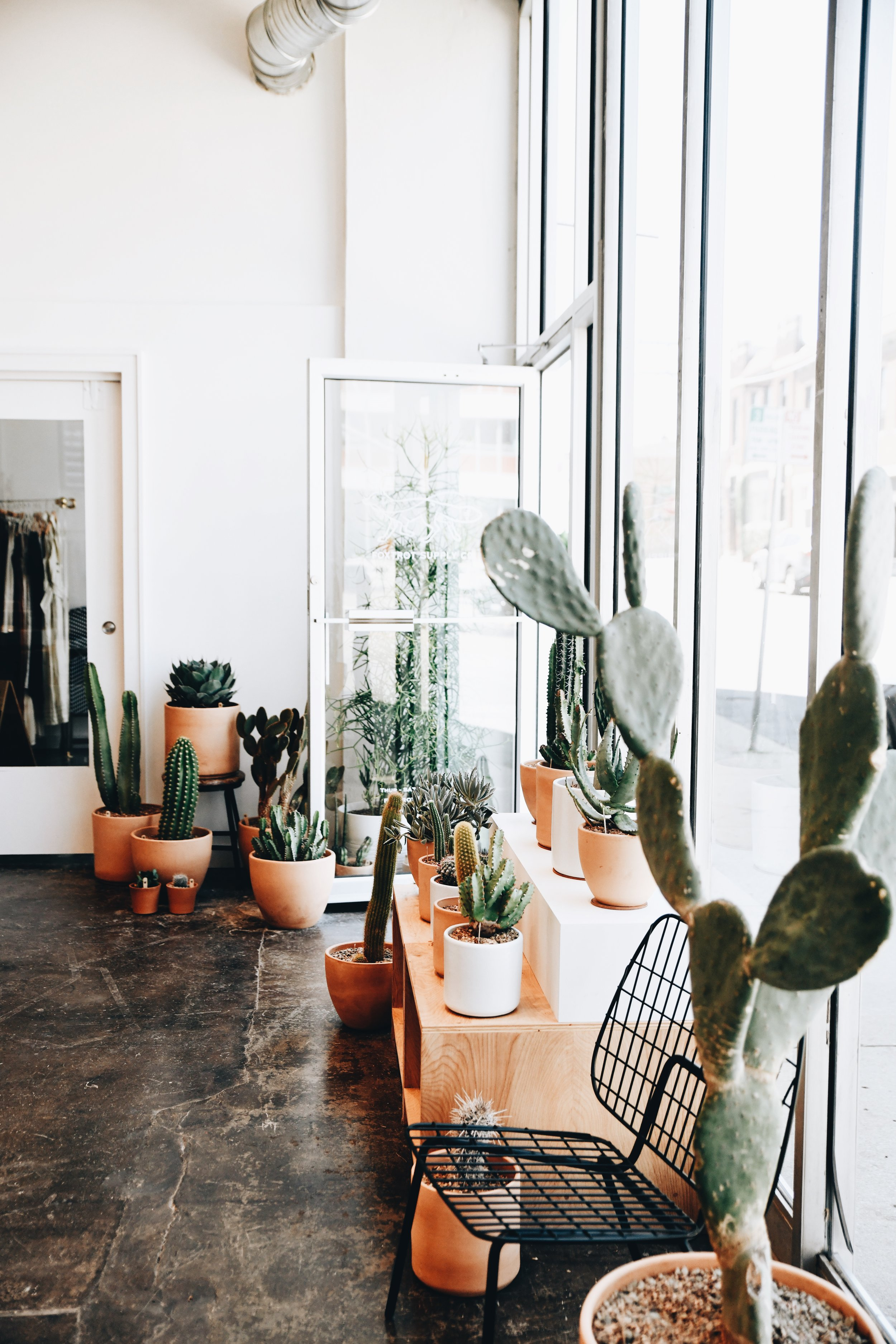 High & Dry Cactus selection inside of Foxtrot Supply Co. Photo by Anna Petrow