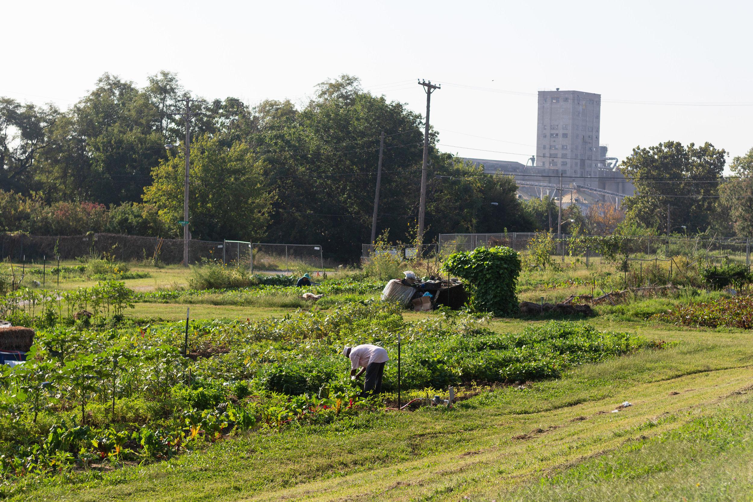 Juniper Gardens Training Farm plots