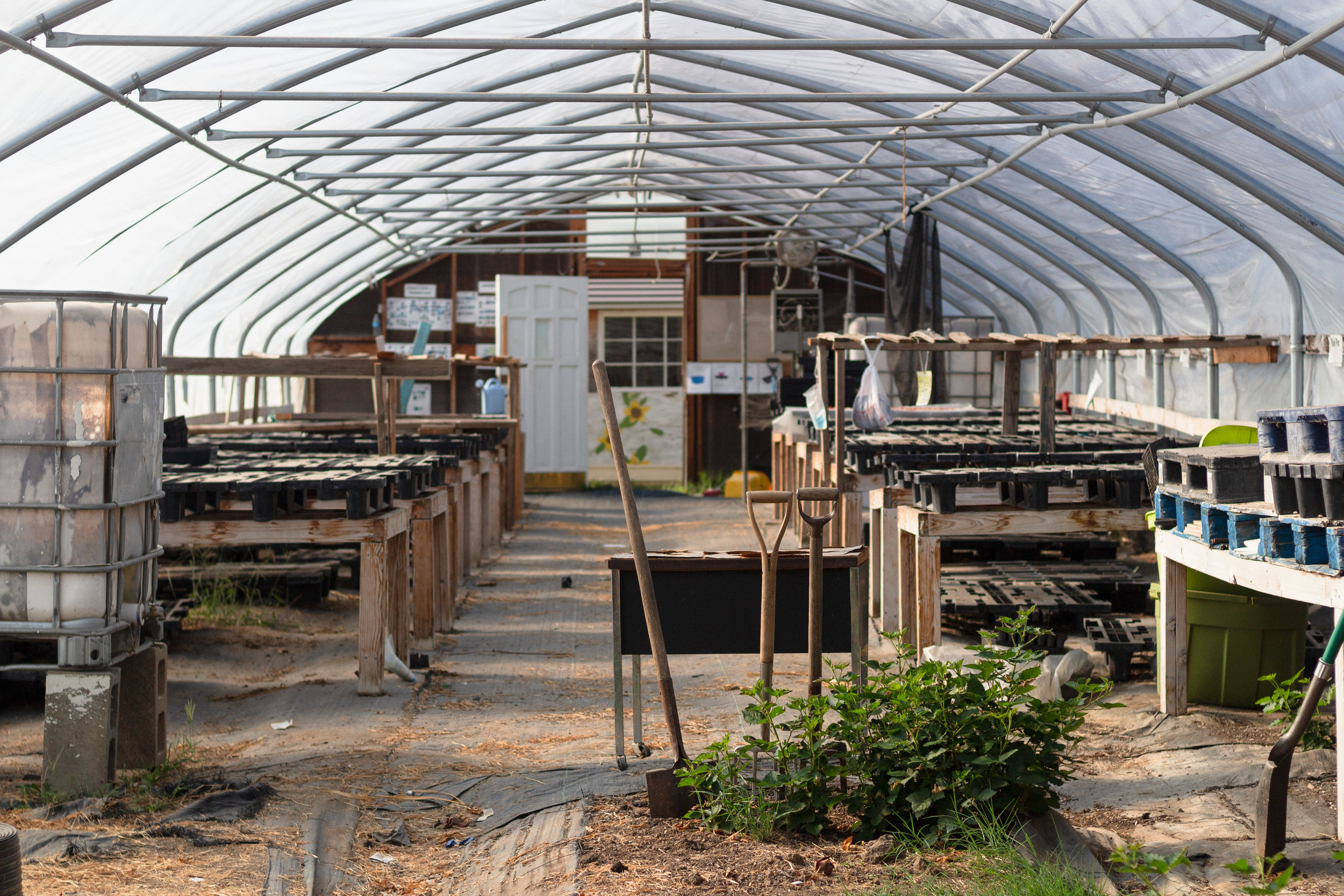 Juniper Gardens greenhouse that all farmers have access to for more climate-sensitive crops