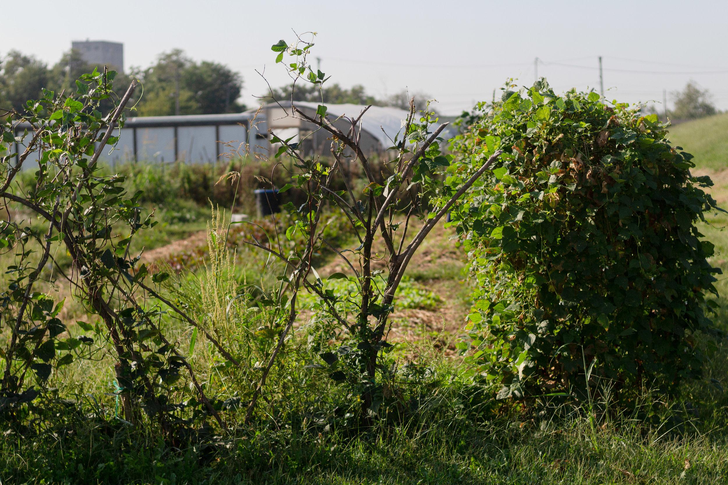 MIKC-Explore-Grace-Pritchett-Juniper Gardens-2.jpg