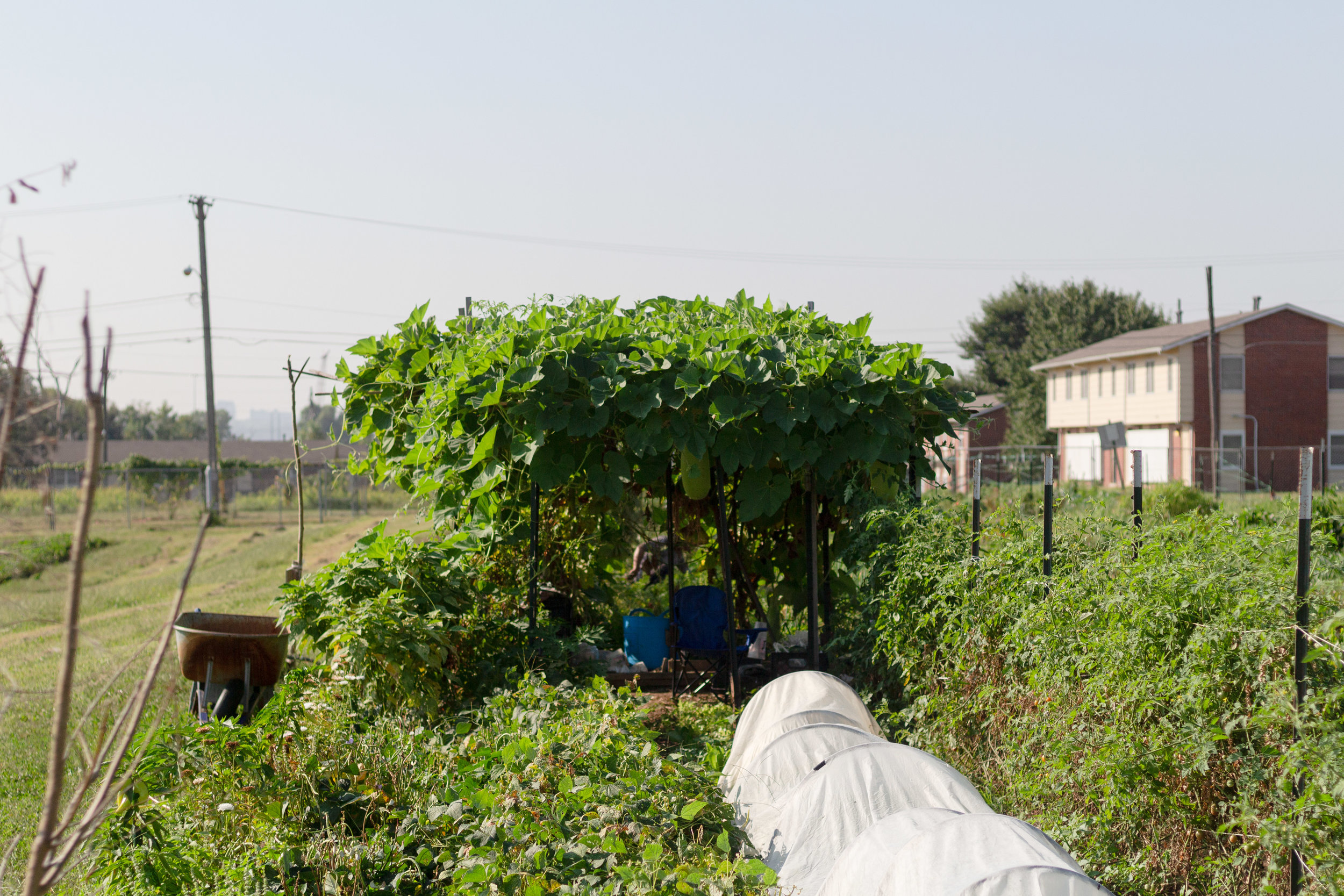 Shade structure for bottle gourds to grow on, constructed by New Roots fourth year farmer, Maria