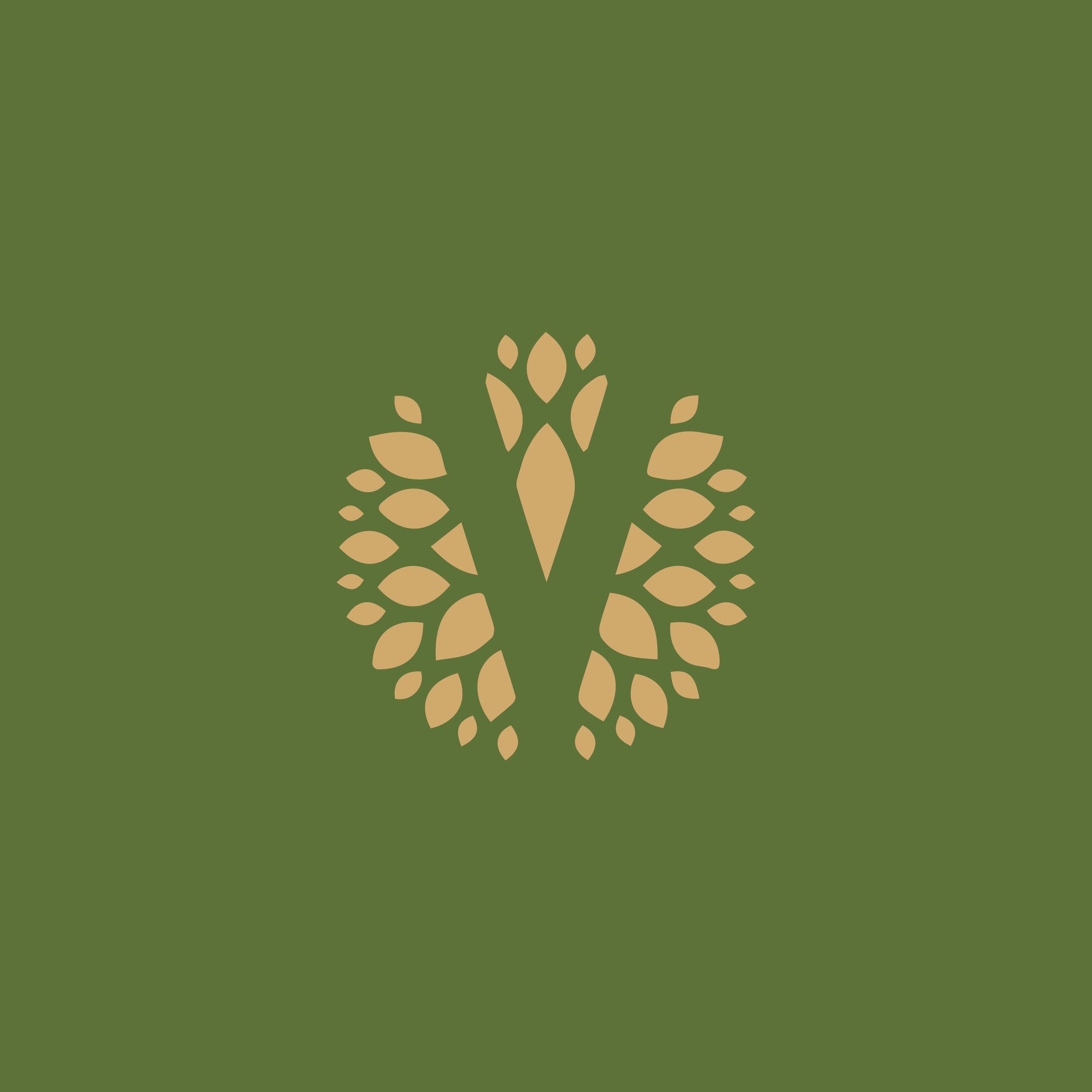 Verde Design Build