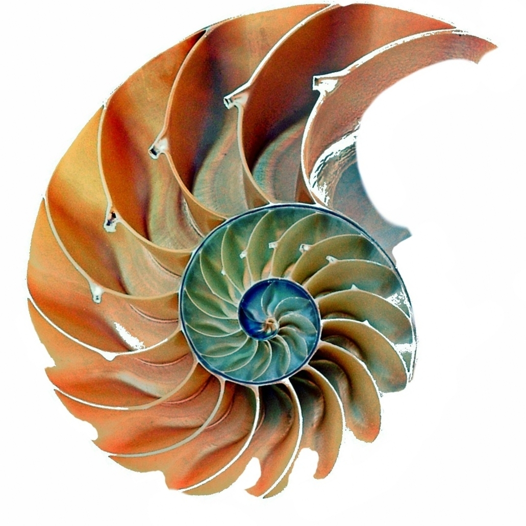 Why Nautilus?  The nautilus begins within a tiny shell, protecting the animal inside. As it outgrows the little chamber, it develops and moves into a new, larger one. This continues throughout its life.  Historically, in literature and philosophy, the nautilus is a symbol of evolution, expansion, and the potential to grow forever. It also symbolizes the vision that we have for our school, as a community of lifelong learners.