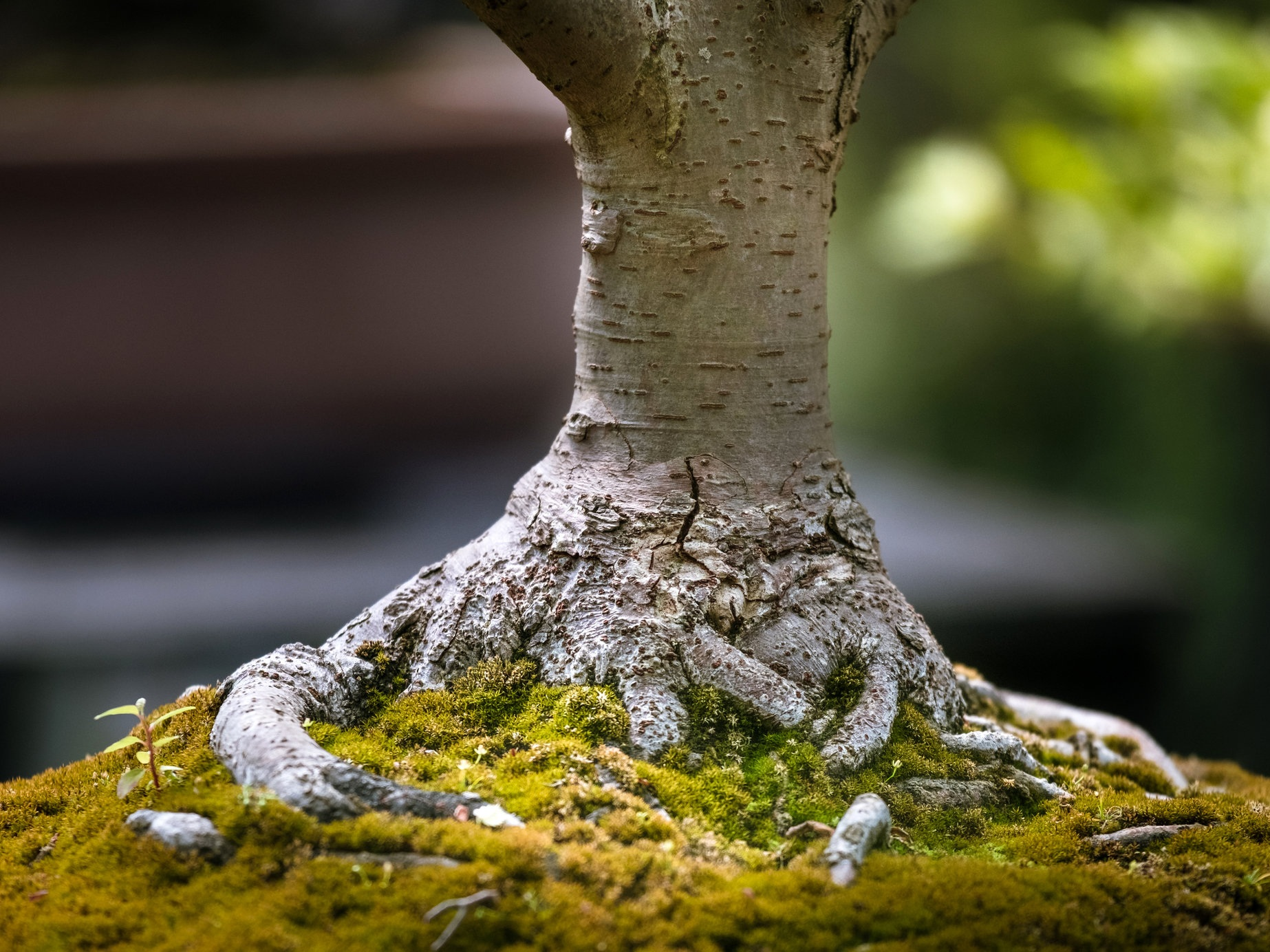 Tai Chi Bonsai Academy repoting training, subject to size of tree, will be £65.00 plus materials. Average 3 hrs of a mindful experience for you to explore, for sure.   For more info on days training go to  Tai Chi Bonsai Academy   Email me please to view the nursery as it is appointment only.