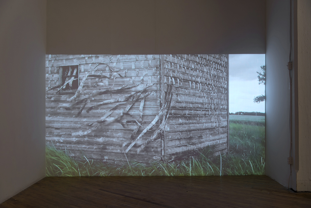 'SHED Root', video installation