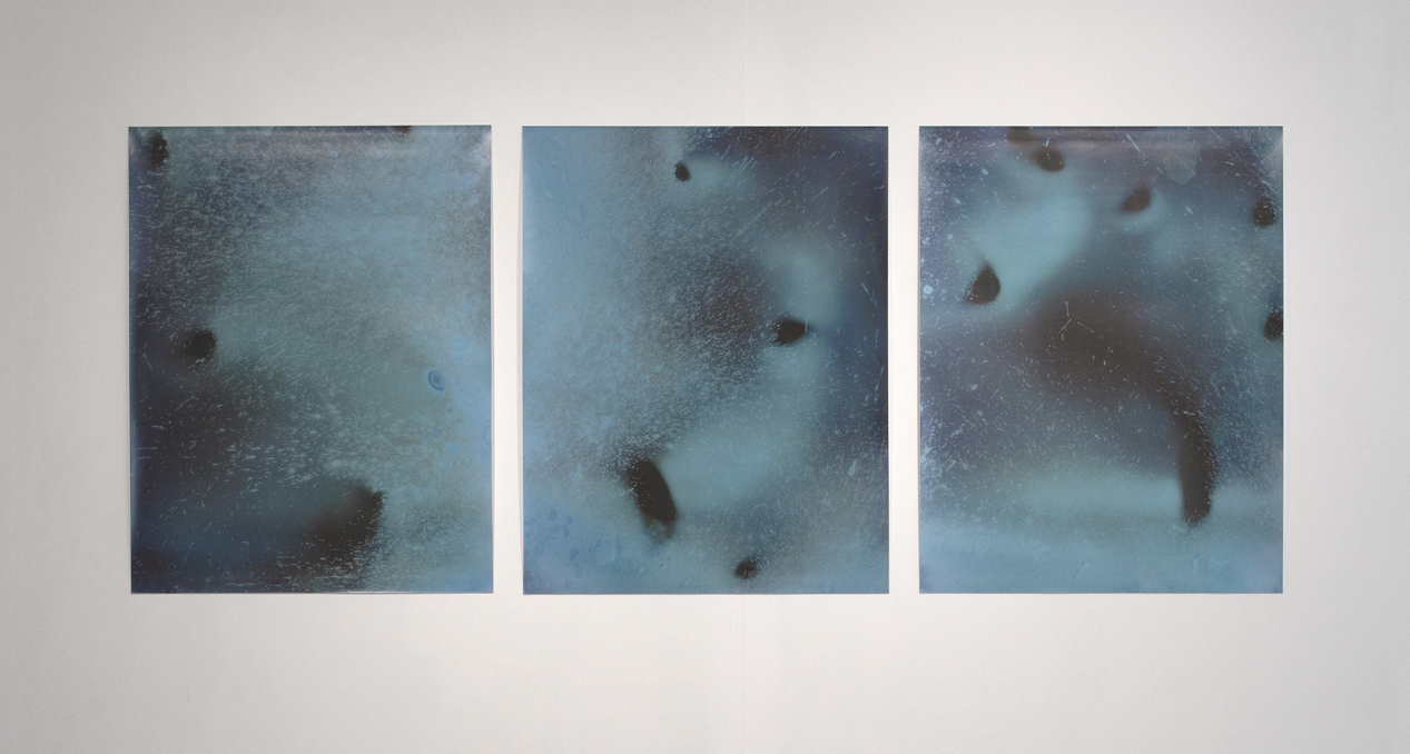 'Littoral Contact', digital prints (photo by Paola Bernardelli)