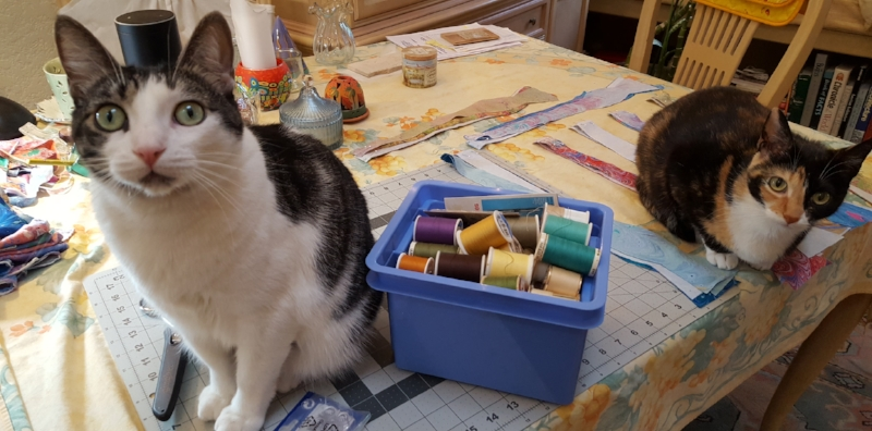 """Maddy and Dusty """"assisting""""... Maddy looks like she's wearing a top hat, but that's """"Alexa"""" in the background. ;-)"""