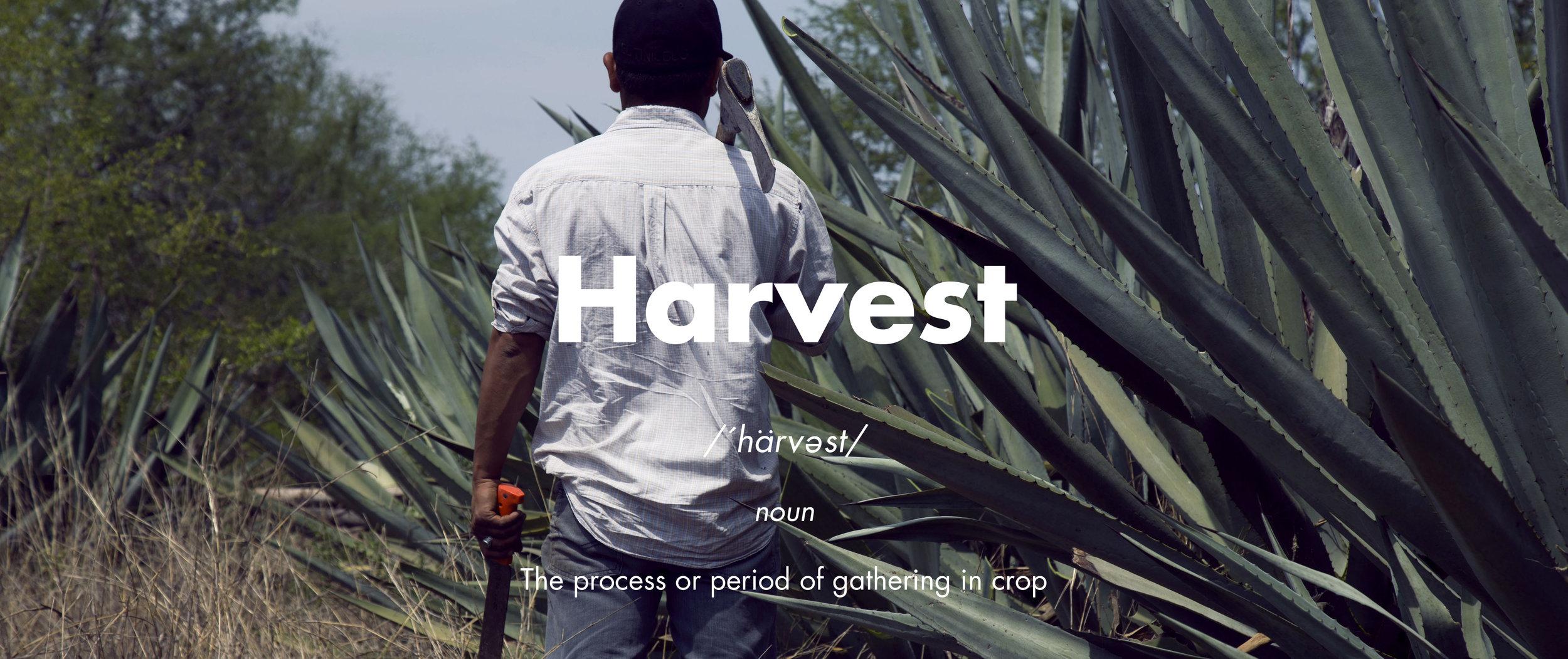 Harvest El Tinieblo