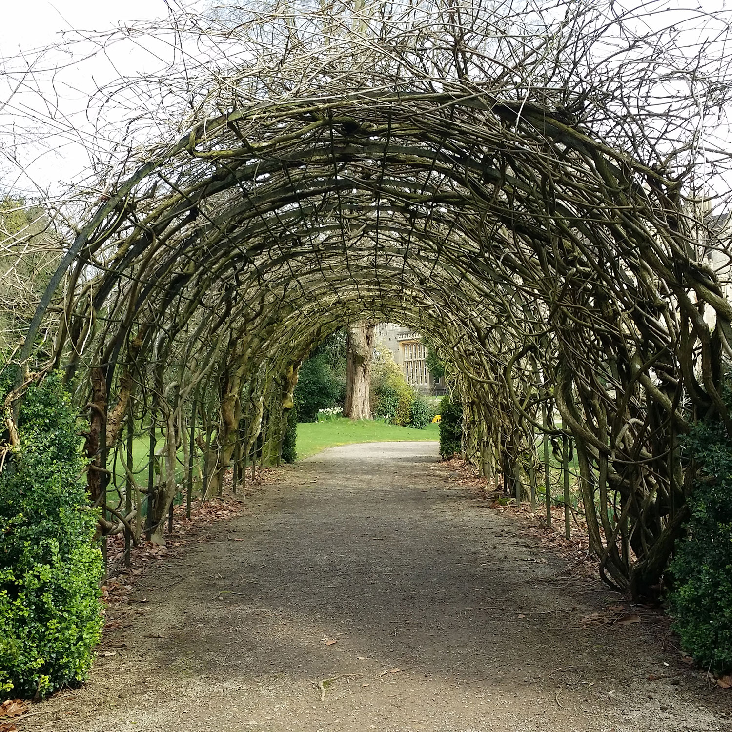 willow archway photo transformational courses workshops and talk goal clarity coaching cheltenham gloucestershire.jpg