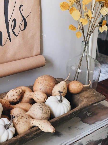 gourds + pumpkins in dough bowl