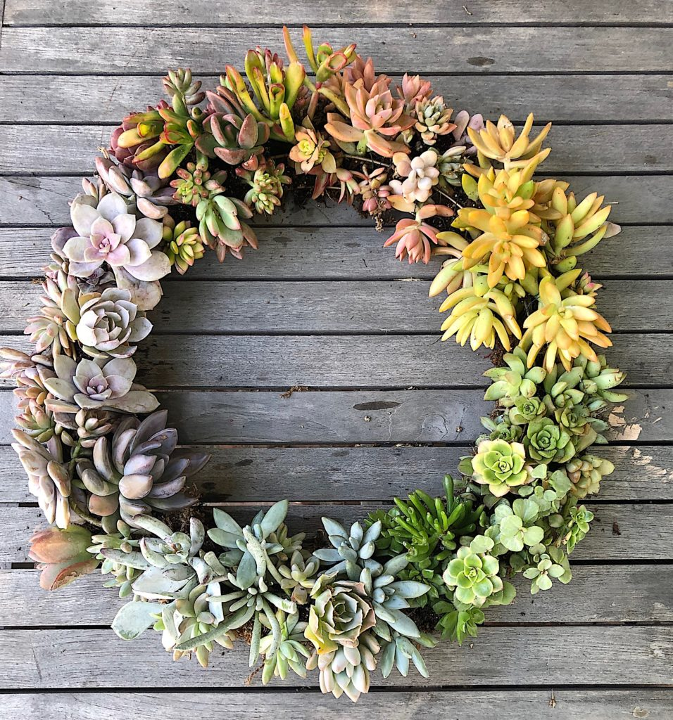 how-to-make-a-succulent-wreath-DIY.jpeg