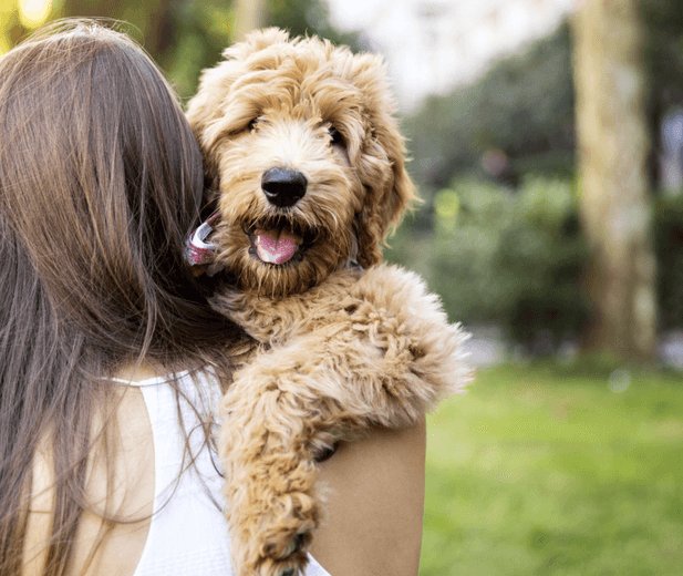 Pet Supplies - Free Shipping