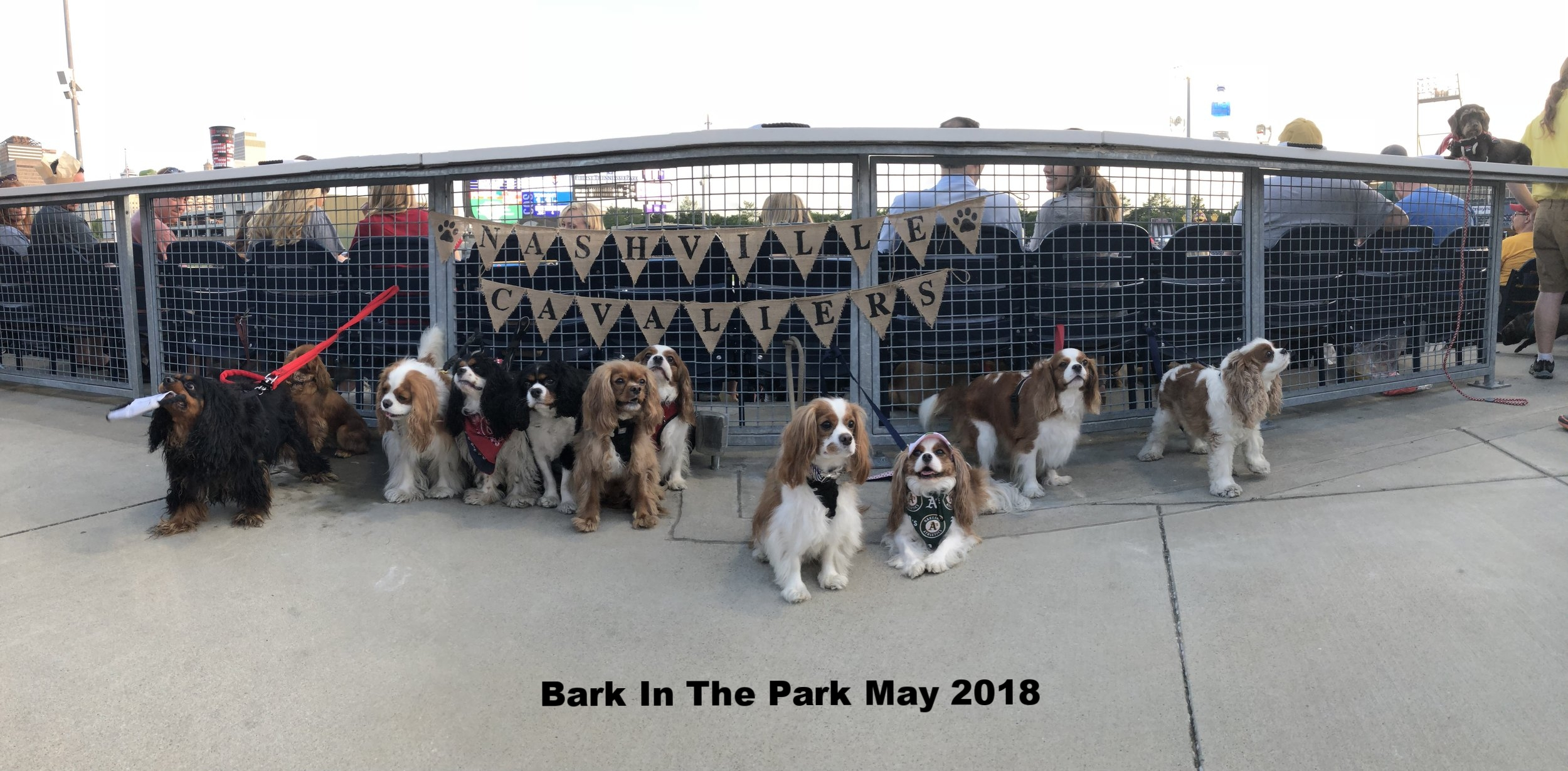 Bark in Park .jpg