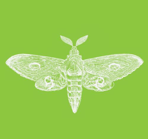 Moth Pass 2019.png