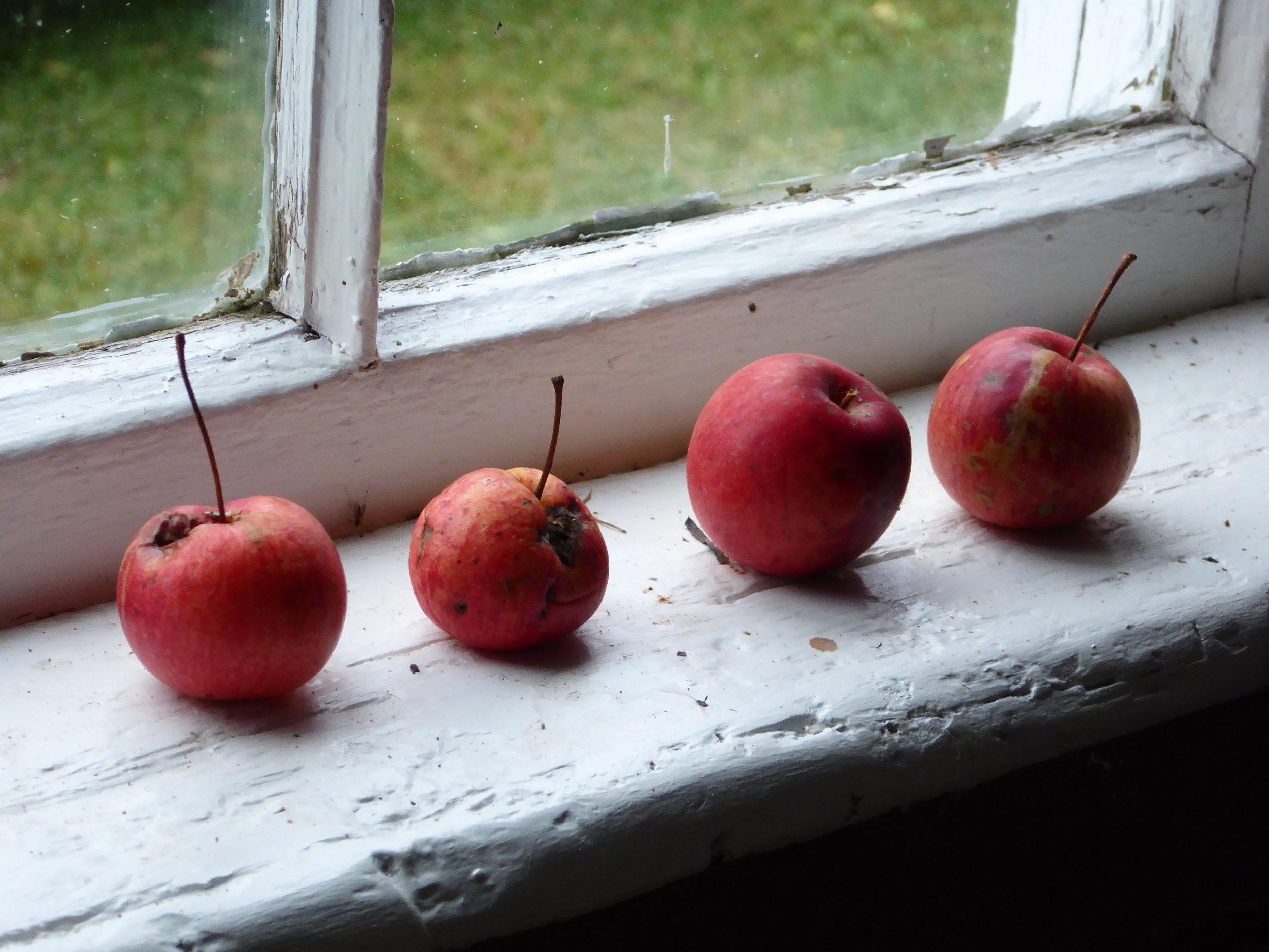 Four small apples on the windowsill of painter Thomas Joseph's midwest studio in O'Fallon, Illinois.