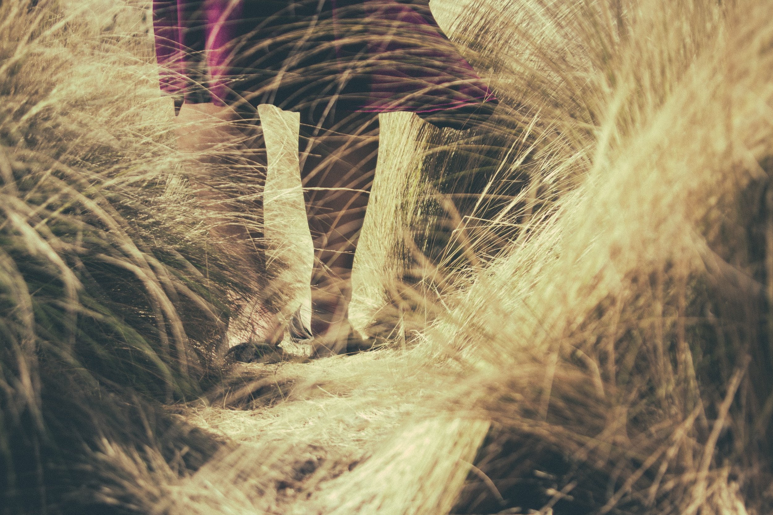 Walking Through Harvest Fields Church Stock Photo.jpg