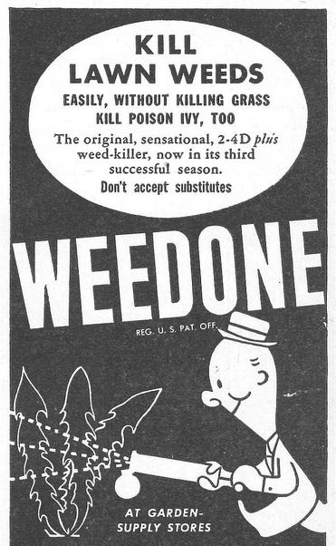 An advertisement for Weedone, containing 2,4-D the principle chemical in Agent Orange, widely known to cause cancer.