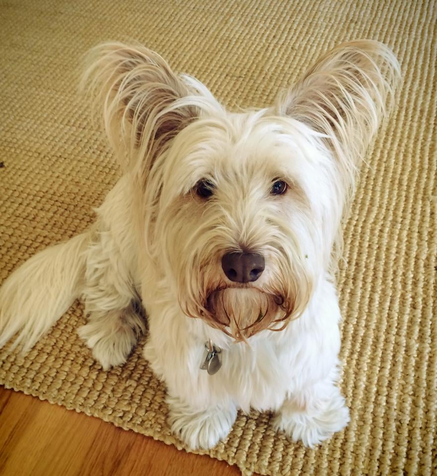 portland_dog_walker_pet_care_scratch_n_sniff_photos_of_happy_animal_clients_11.jpg