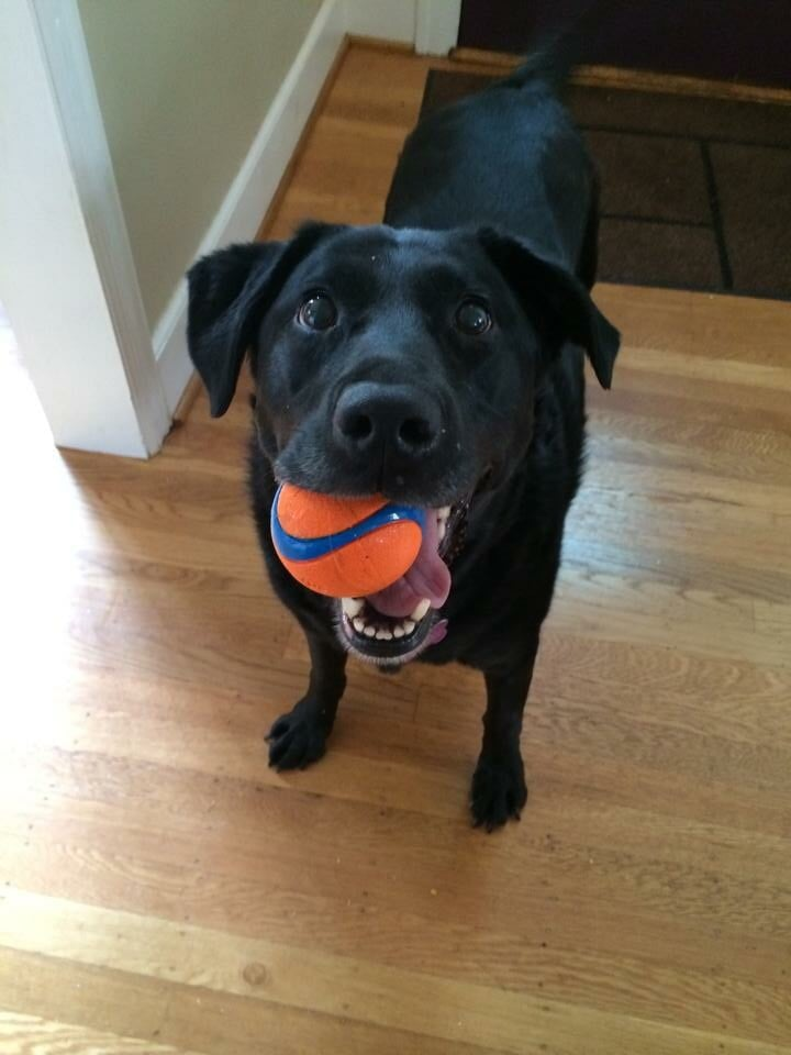 portland_dog_walker_pet_care_scratch_n_sniff_photos_of_happy_animal_clients_20.jpg