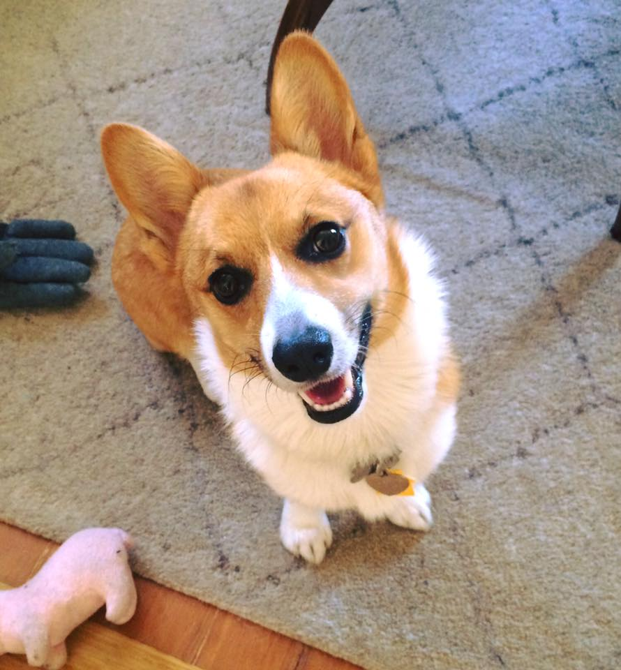 portland_dog_walker_pet_care_scratch_n_sniff_photos_of_happy_animal_clients_32.jpg