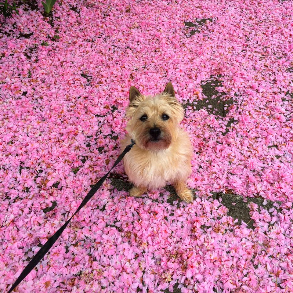 portland_dog_walker_pet_care_scratch_n_sniff_photos_of_happy_animal_clients_44.jpg