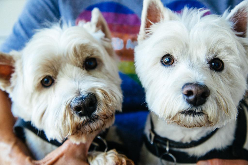 portland_dog_walker_pet_care_scratch_n_sniff_shaley_howard_dog_walks_16.jpg