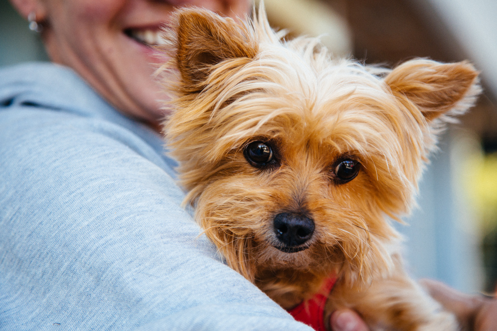 portland_dog_walker_pet_care_scratch_n_sniff_shaley_howard_dog_walks_24.jpg