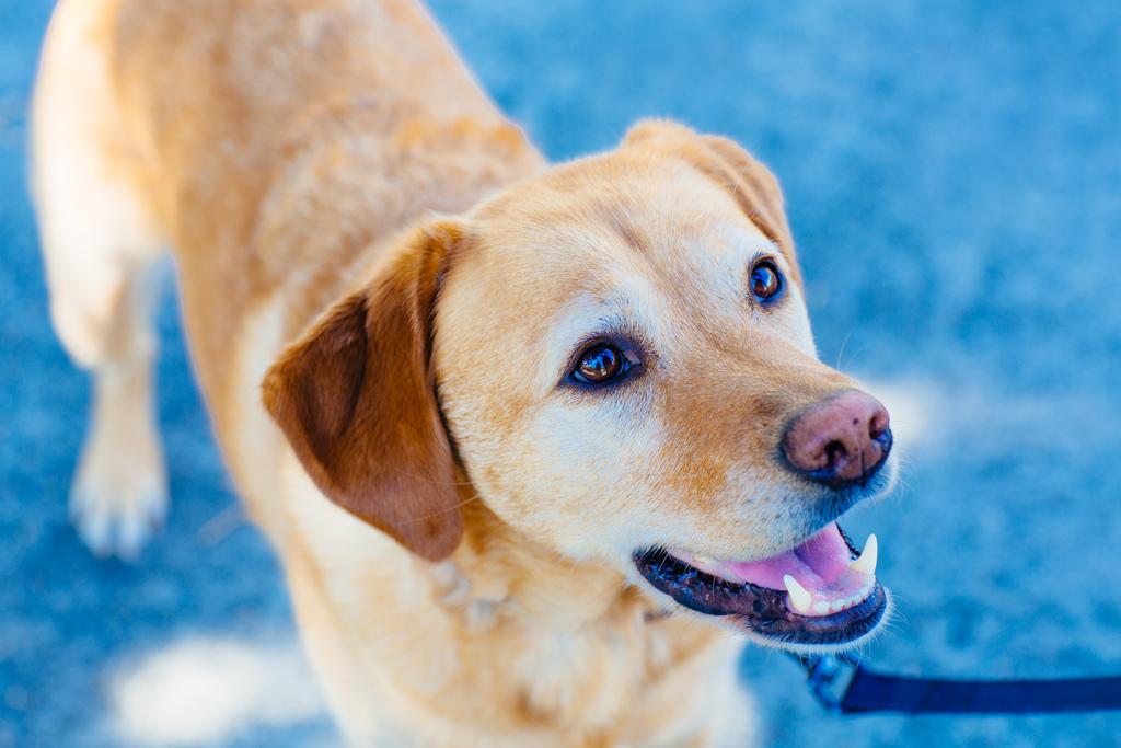 portland_dog_walker_pet_care_scratch_n_sniff_shaley_howard_dog_walks_30.jpg