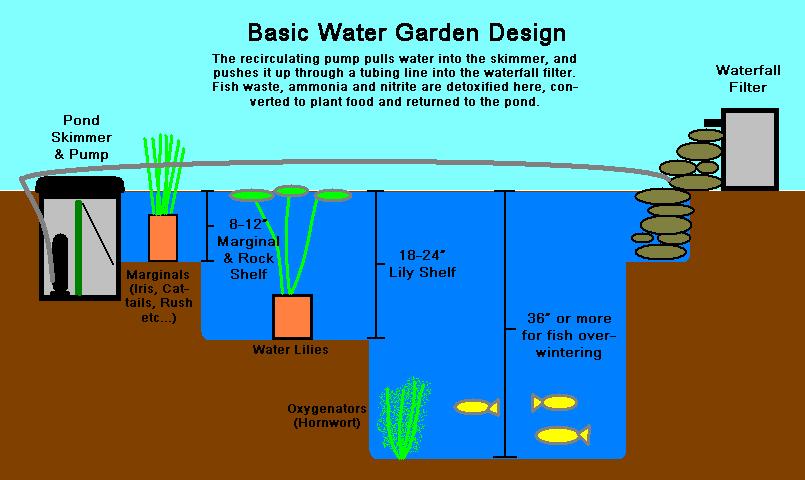 pond_diagram copy.jpg