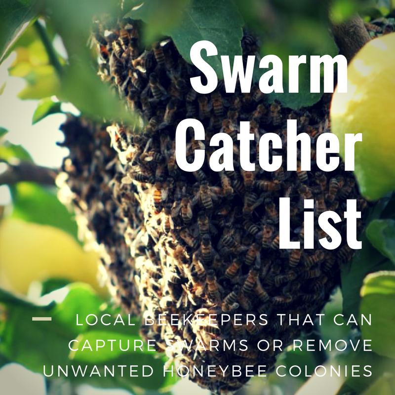 Swarm CatcherList (1).png