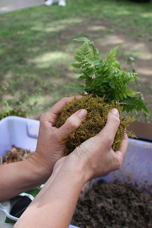 4e10c7d495ee16666b25914cee0b1310--bonsai-garden-moss-garden.jpg
