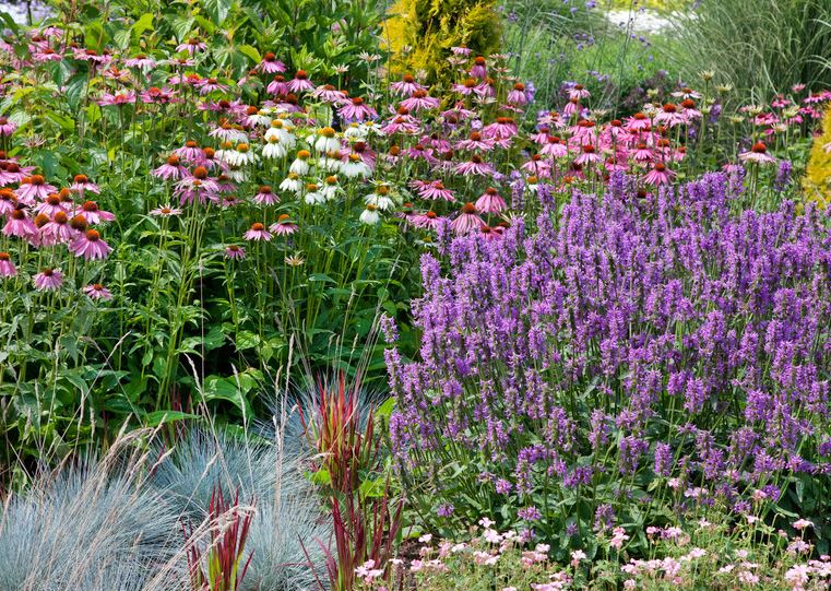 Perrenial-garden.jpg