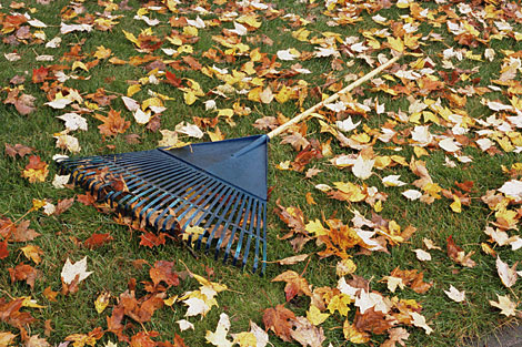 54ca73eb65f89_-_fall-leaves-rake-470-0908.jpg