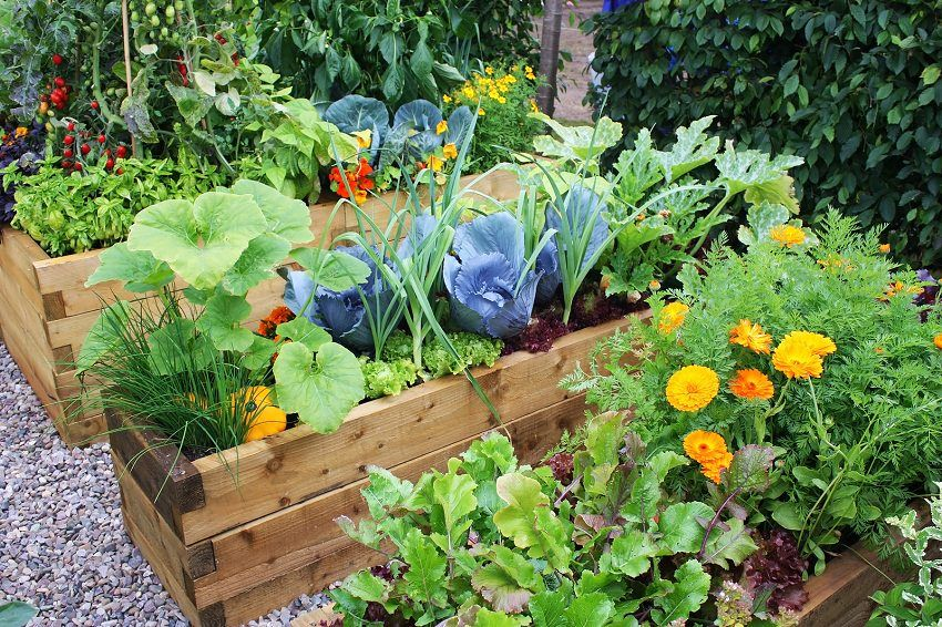sample raised bed veg garden.jpg