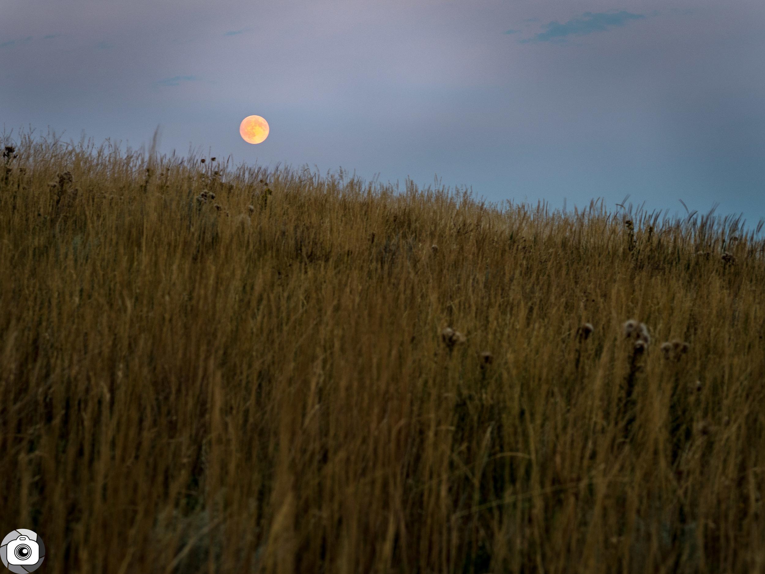 Blog_Prairie_Moonlight-3.jpg