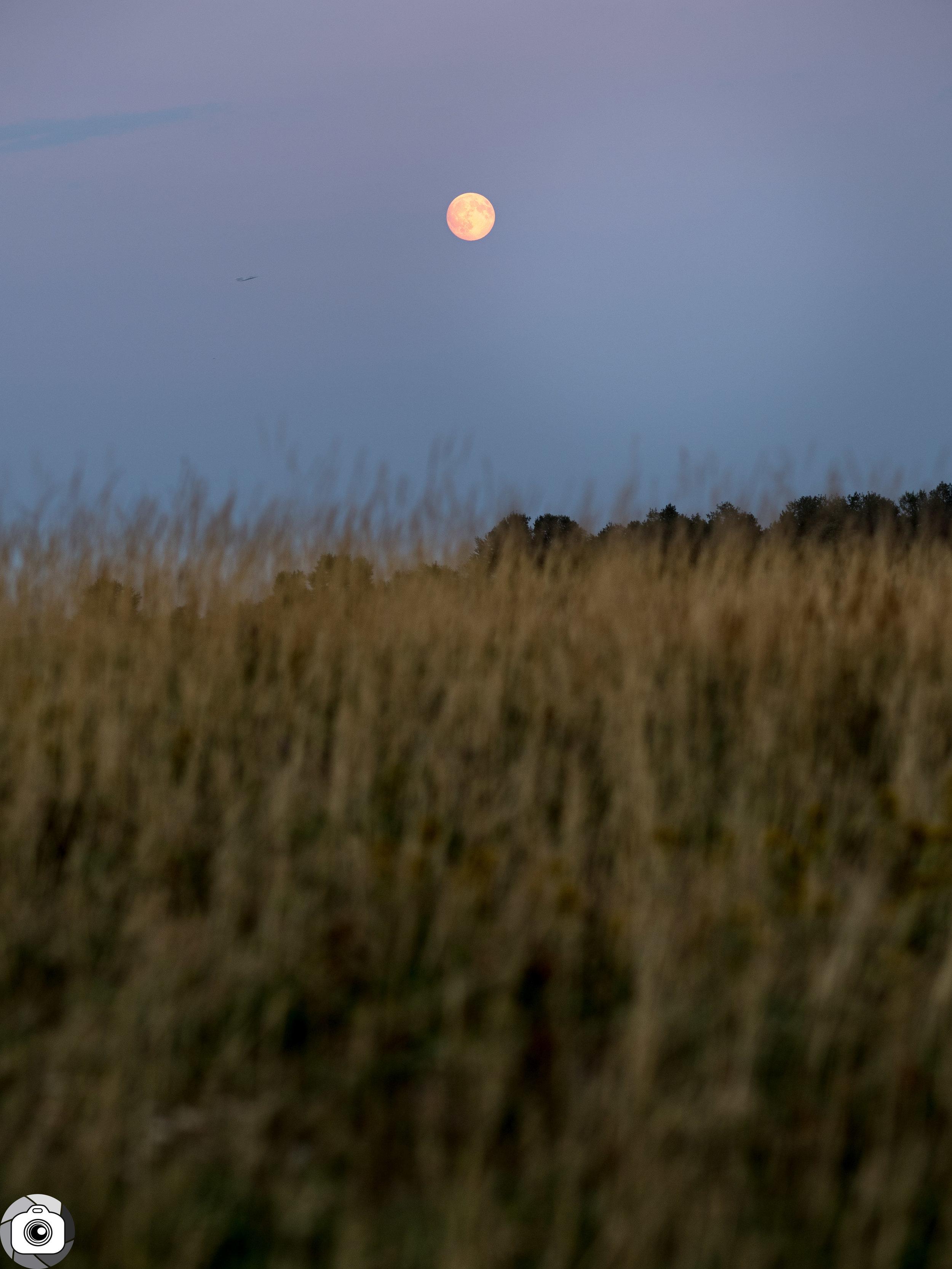 Blog_Prairie_Moonlight-4.jpg