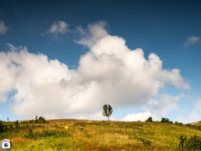 Blog_Prairie_Summer-1.jpg