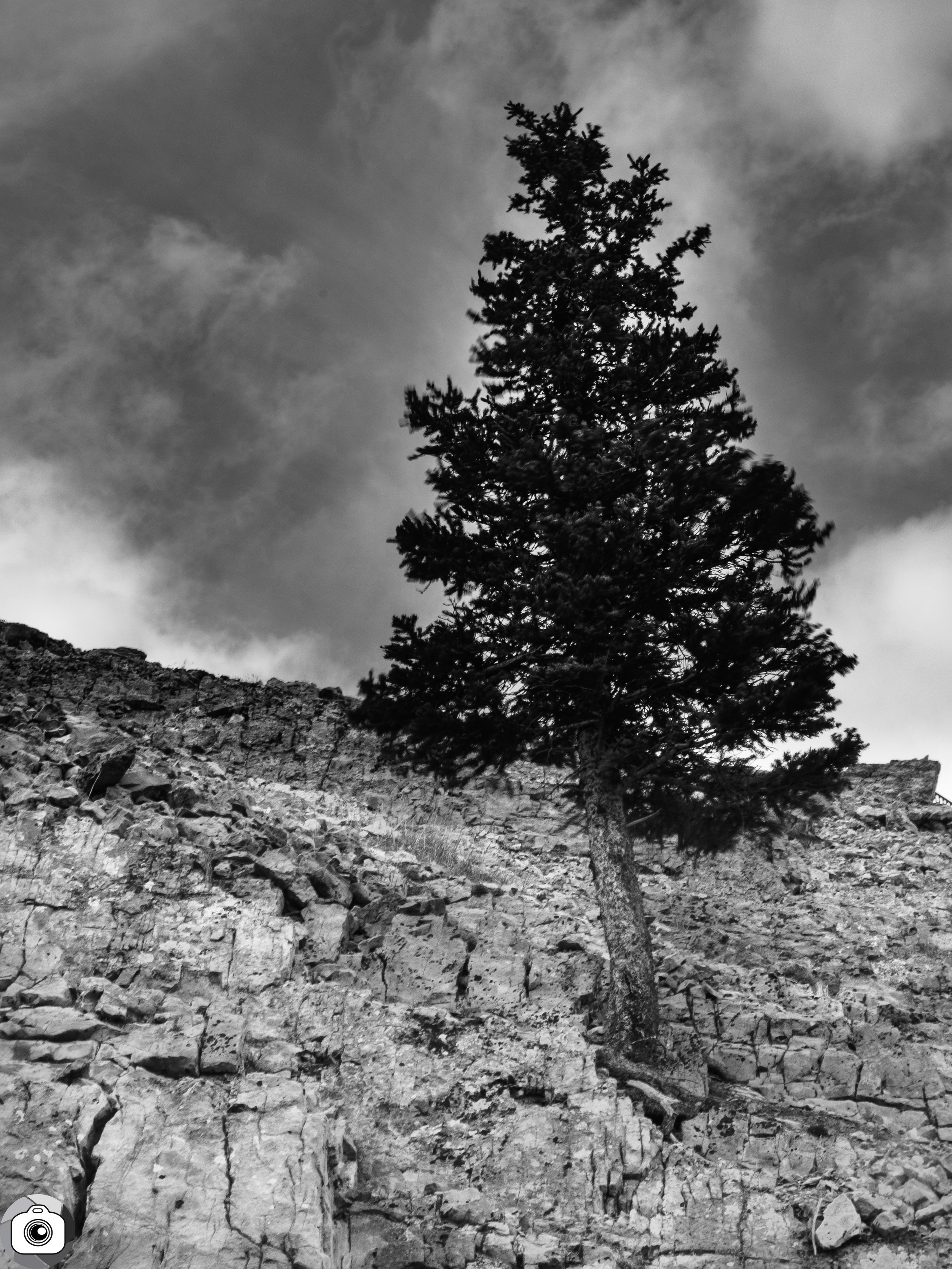 Blog_Trees_Part2-2.jpg
