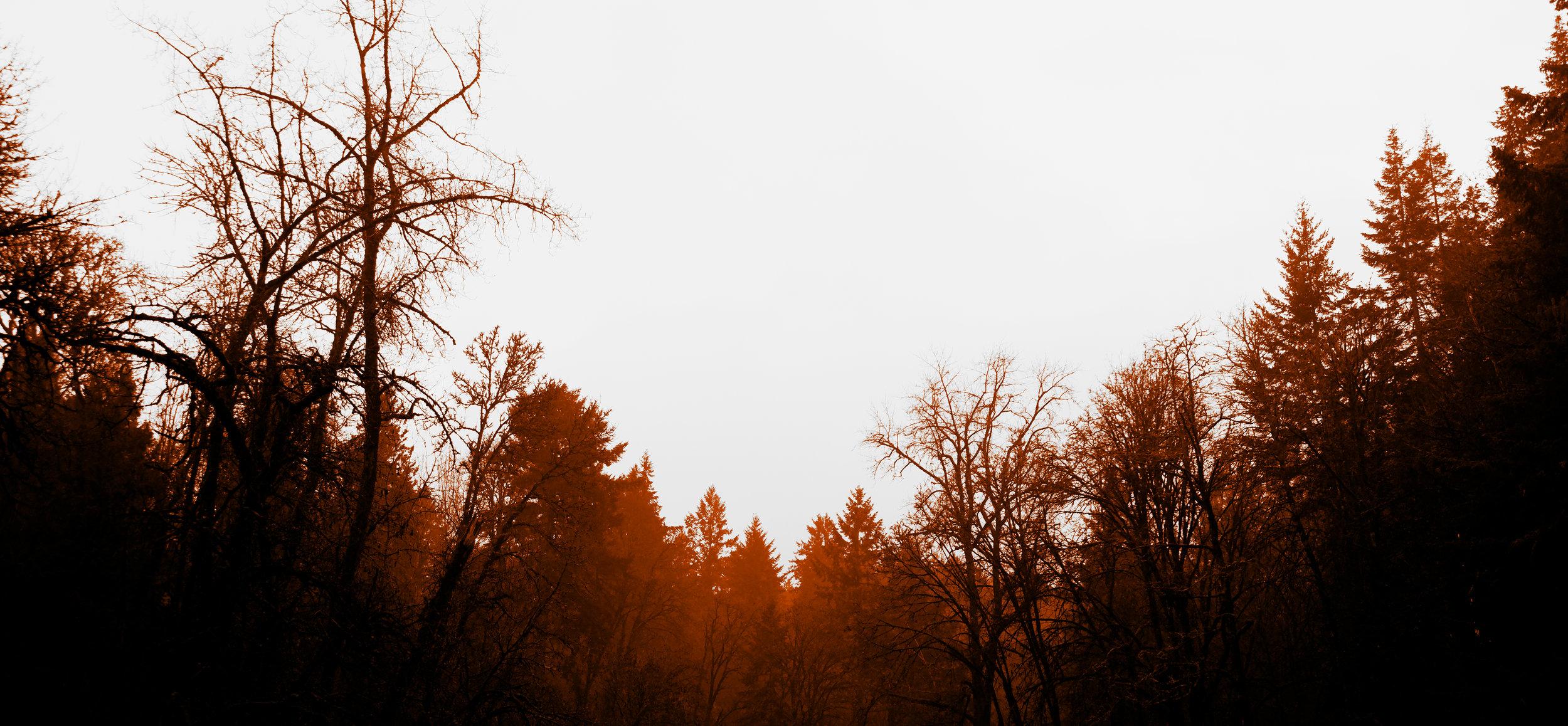Dark forest - Nathaniel Barber Blog