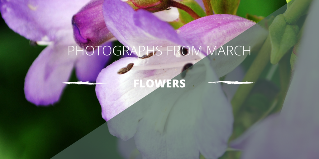 photos-MARCH.png