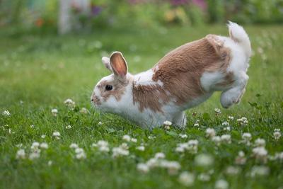 bunny hop yoga move