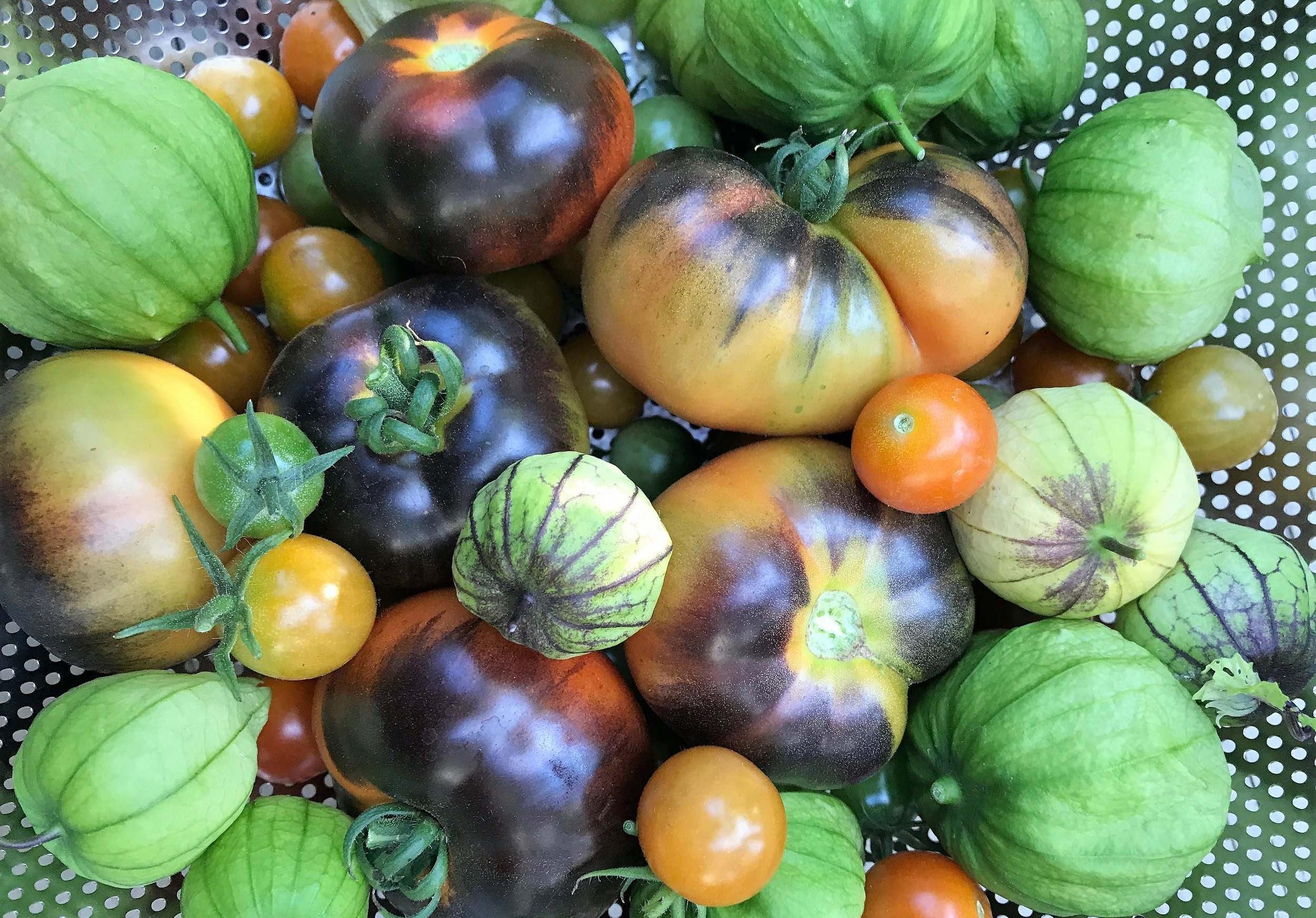 Tomato+&+Tomatillo+Harvest+2017+(2).jpg