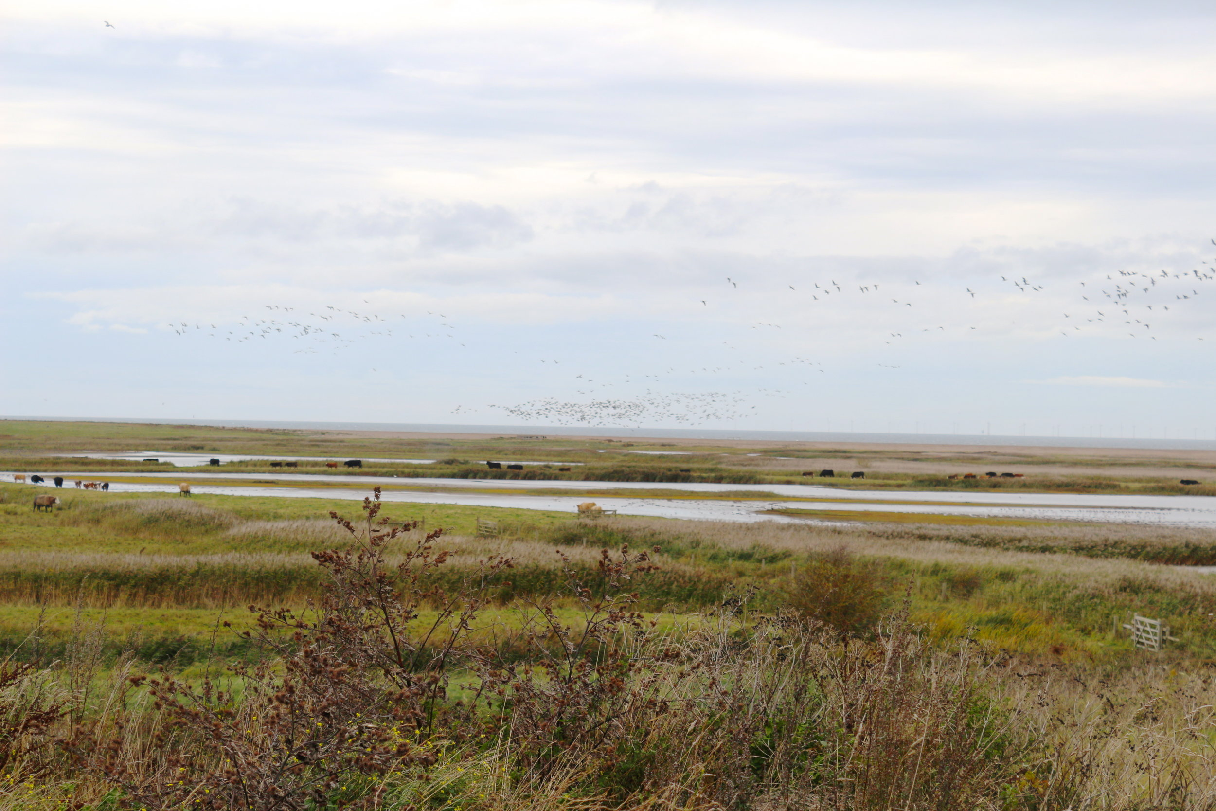North norfolk nature reserve