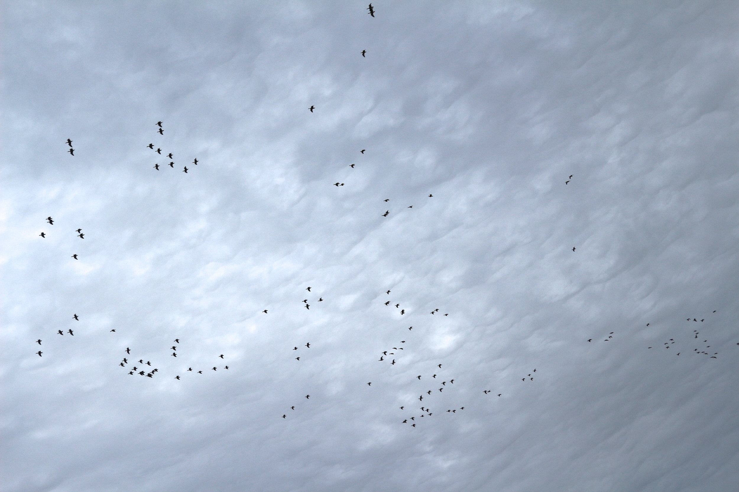 migrating birds north norfolk nature reserve