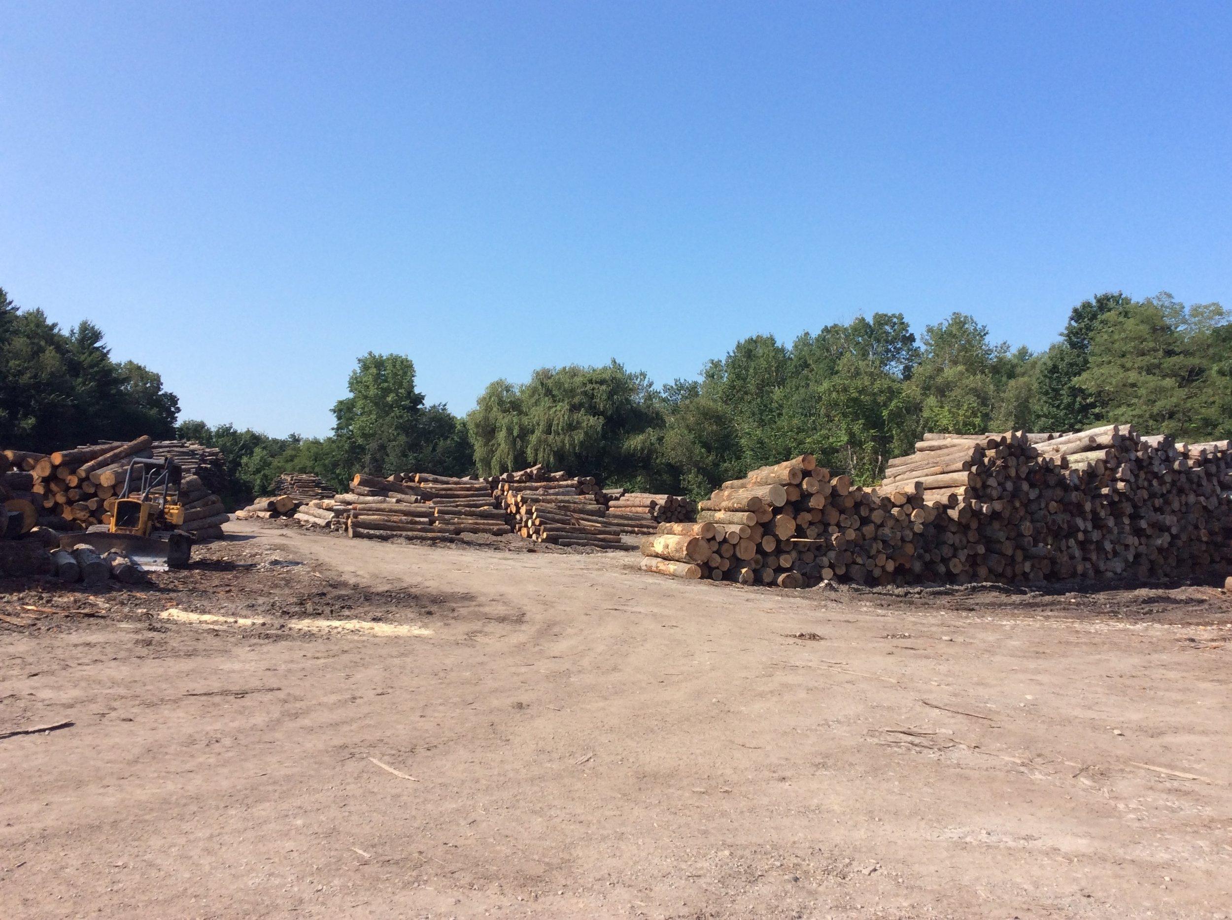 Log Yard 1.JPG