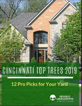 top-trees-for-Cincinnati-2019-Download.JPG